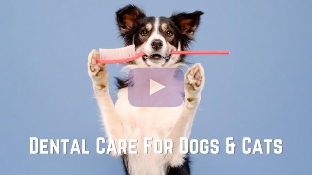 Emergency Vet Springdale _ Video Thumb 030421