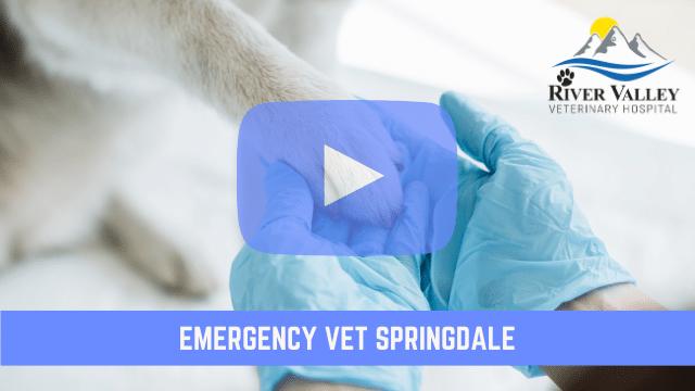 Emergency Vet Springdale